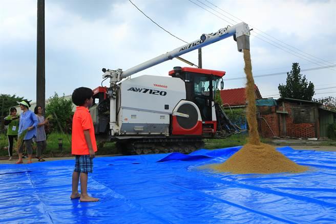 南台科技大學來坐農創工作室13日在台南後壁頂常社區舉辦割稻體驗,連打榖機都出動了。(南台科技大學提供/劉秀芬台南傳真)