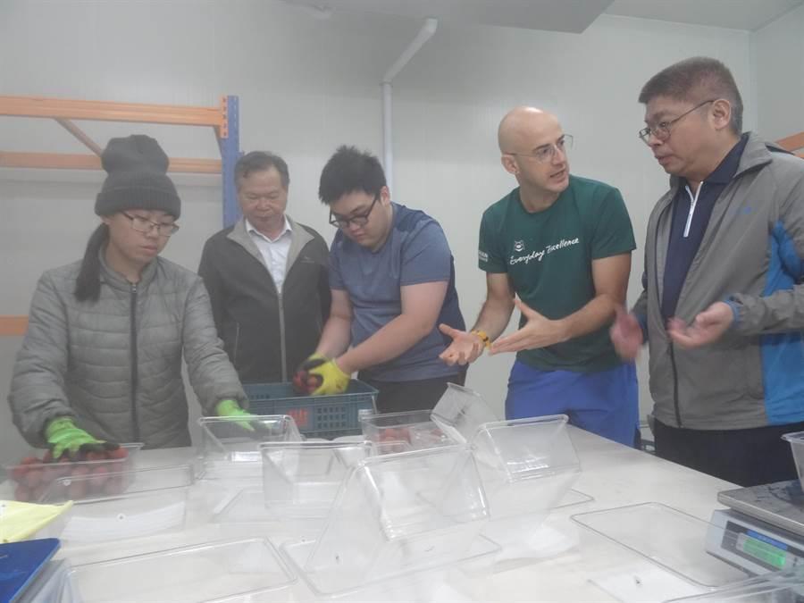 台灣女婿吳鳳(右二)實際到冷鏈廠體驗4度C的冷鏈冷藏荔枝,一起推廣台中的黑葉荔枝。(馮惠宜攝)