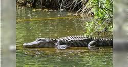 婦遭「6公尺巨鱷」襲擊…家屬悲慟尋回散落殘肢 村民怒殺鱷魚剖肚取屍!