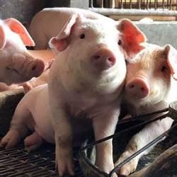 台灣自口蹄疫區除名 賴清德:豬農產品將再閃耀國際