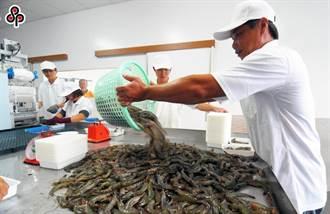 螯蝦場染十足目虹彩病毒 農委會銷毀1200台斤成蝦