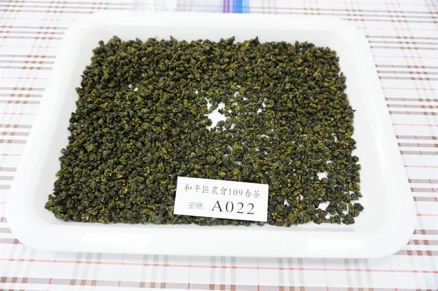 梨山青心烏龍成茶外觀色澤翠綠,沖泡後茶湯水色蜜綠帶黃略帶花果香,滋味清醇鮮爽。(王文吉攝)