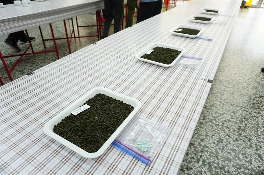 2020年梨山茶評鑑比賽茶以產自梨山之春季青心烏龍茶,計有515組參賽,競爭激烈。(王文吉攝)