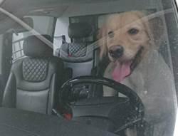 大熱天寵物獨留車內 北市首度開罰飼主2000元