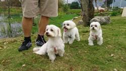 花蓮毛小孩有福了 首座寵物運動公園預計年底完工