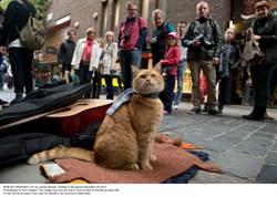 主人為牠勒戒...14歲最紅街貓「Bob」過世 30萬人悼念