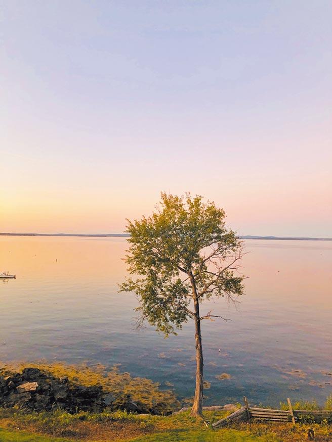 緬因州湖畔一棵樹孤獨佇立。晚霞粉紅,塵世豈止遠離?