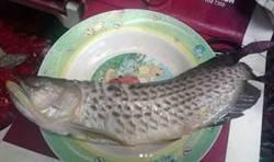 寶貝寵物金龍魚遭父宰殺吃下肚 男子崩潰:牠很貴!