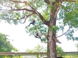 最難忘回憶 攀樹摘旗換畢業證書