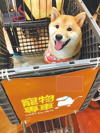 寵物獨留車內好熱 飼主吃罰單