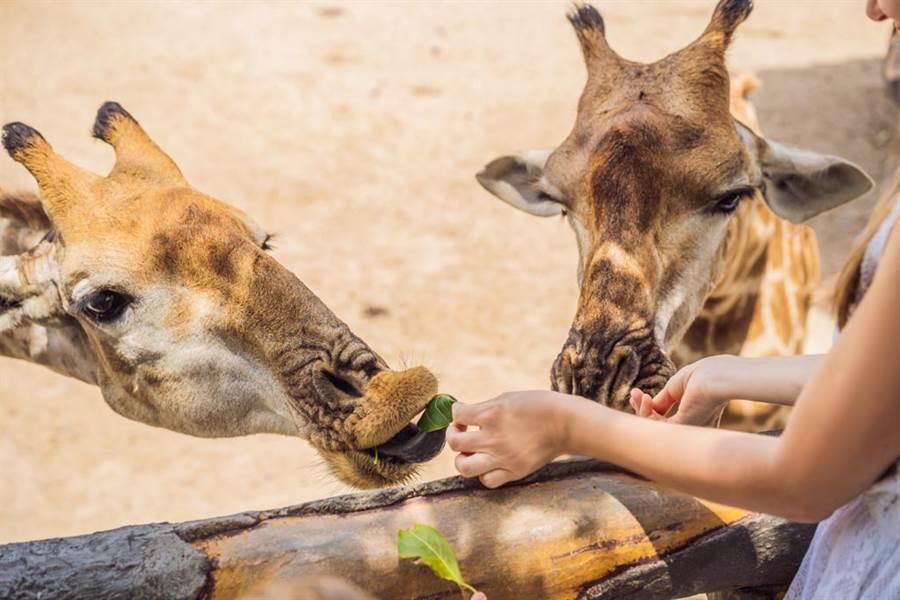 台中貴為第二大城為何嘸動物園?在地人曝秘辛(示意圖/達志影像)