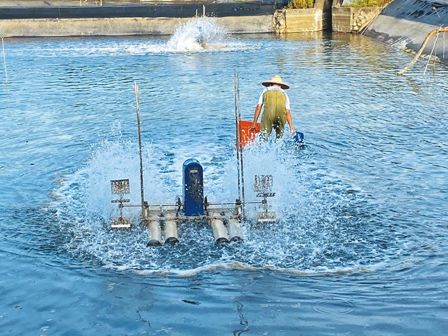 宜蘭縣的養蝦場也傳出「十足目虹彩病毒」的疫情。(宜蘭縣政府提供/胡健森宜蘭傳真)