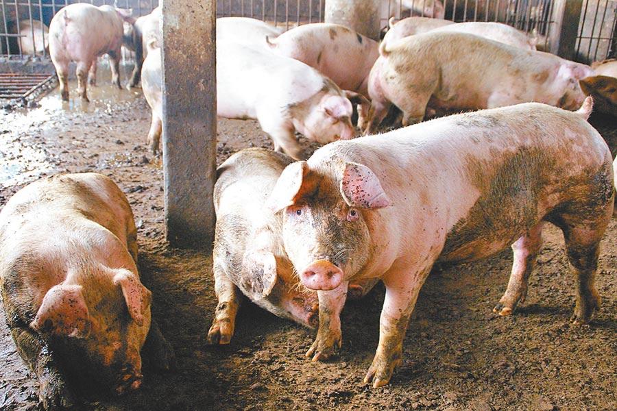 雲林縣畜牧場自治條例將增設「總量管制」條文,本周五將二、三讀,引起畜牧業者反彈。(周麗蘭攝)