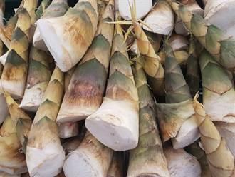 竹筍怎挑怎料理才不會苦?內行曝美味關鍵