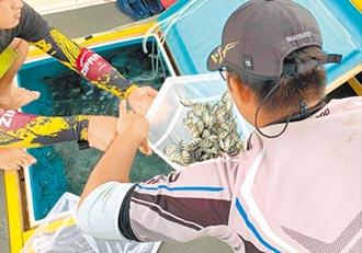 台電合作澎湖水試所 放流3物種復育海洋