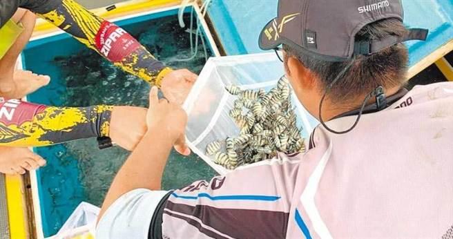 台電與農委會澎湖海洋生物研究中心擴大舉辦放流,孕育數萬種苗,這是今年最大場次。(攝影/中國時報陳可文)