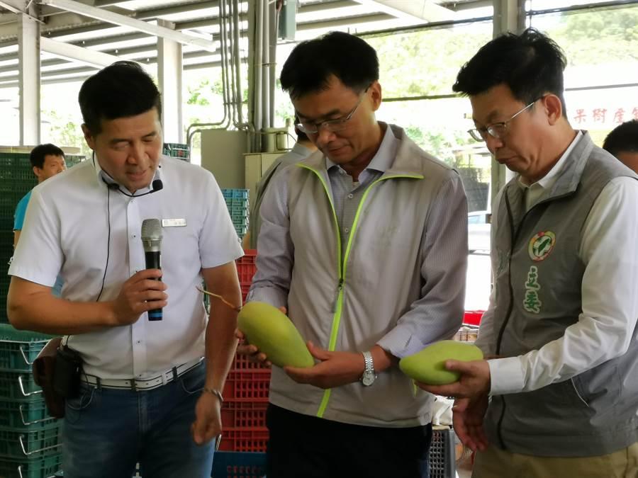 農委會主委陳吉仲(中)至台南市南化區農會關心芒果產銷狀況。(劉秀芬攝)