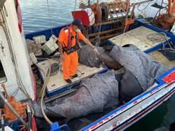 花蓮漁船4天捕獲6隻巨口鯊 保育團體呼籲禁捕
