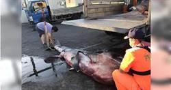 花蓮流刺網漁船4天捕獲6隻稀少巨口鯊 保育團體籲禁捕