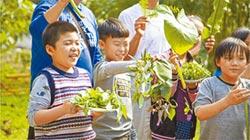 野菜學校 讓孩子更親近土地