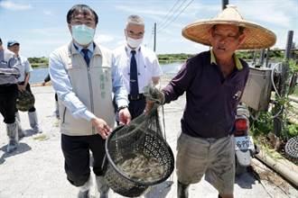守護蝦仁飯!黃偉哲視察南市養蝦場防範病毒