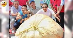 六百八十六斤大南瓜 淡水林建訓全國賽奪冠