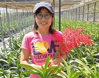 碩士女青農返鄉種腎藥蘭 疫情阻外銷拼內銷