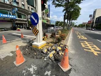整修中央分隔島遭議 嘉義市政府:樹木老化遭蟲害