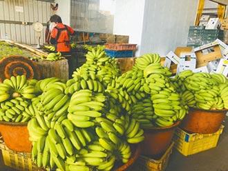 高雄首選電商平台 想吃香蕉 上網訂就行