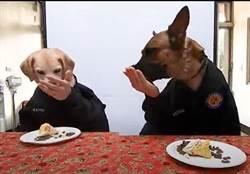 全球搶先看!首創明星警犬穿制服吃粽子慶端午