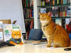 救了毒蟲人生...「街貓Bob」真正死因曝光 粉絲聽到崩潰了