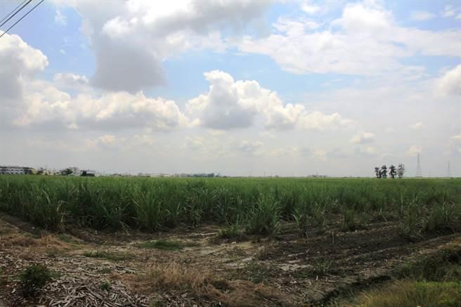七股科技工業區位於台糖三股農場範圍,面積逾140公頃,去年1月獲經濟部核定,將以低汙染產業為主,目前仍停留在開發商甄選階段。(莊曜聰攝)