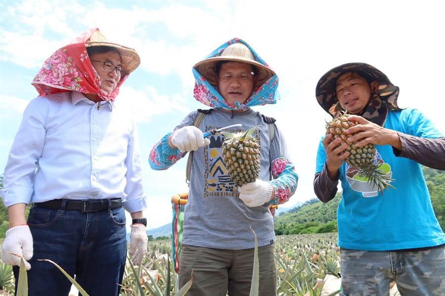 交通部長林佳龍與立委劉櫂豪體驗採鳳梨。(交通部提供)
