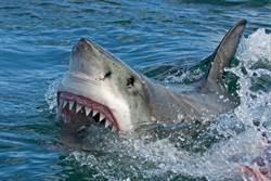 猛男徒手捕鯊 下一秒竟「掰開鯊魚嘴」合影