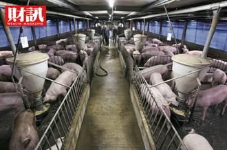 終結23年夢魘、列名亞洲唯二口蹄疫非疫區 瞄準外銷百億商機 台灣需要一個豬肉國家隊