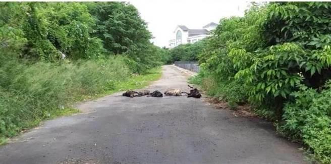 犬界ISIS殘殺!6流浪狗遭宰殺排路中央示眾警約談1男。(翻攝二林人大小事臉書社團)