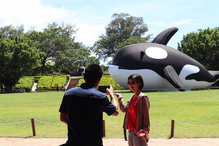 今日(25)為端午連假首日,目前暫時展示於安平億載金城的虎鯨Orca,吸引不少遊客慕名前來拍照。(李宜杰攝)