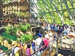 台北市立動物園人潮亮紅燈 上午入園破8500人