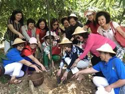 端午連假好去處 五股綠竹社區推親子採筍趣
