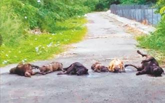 7流浪犬遭毒殺 晾屍大馬路