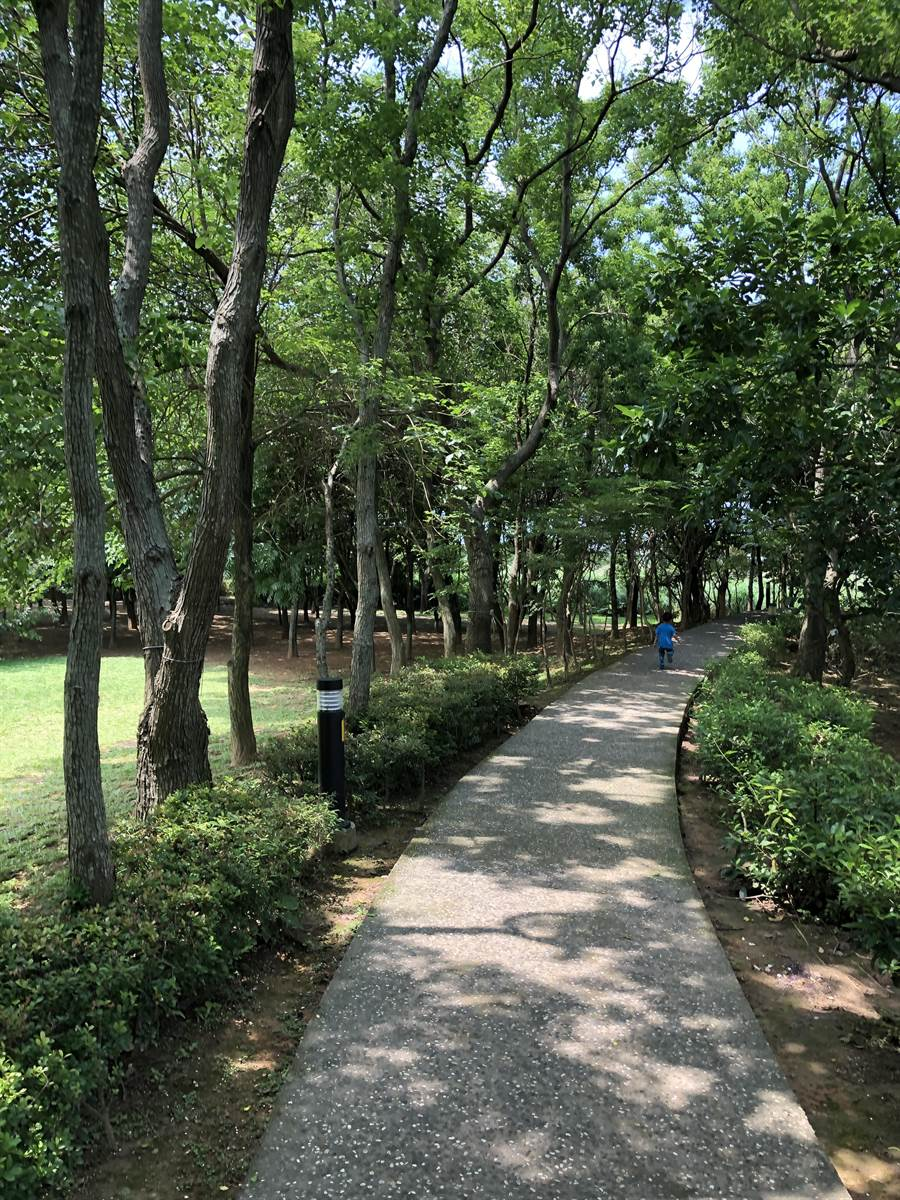 樹木有一項重要的功能就是降溫,加上白天行光合作用會吸收二氧化碳釋放氧氣,大面積綠化在都市降溫上有顯著的功能。(李柏澔攝)