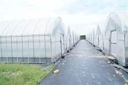 竹縣推有機農業 協助青農爭取溫室經費