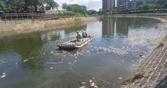 溫度太高熱死魚 後勁溪撈10噸屍體