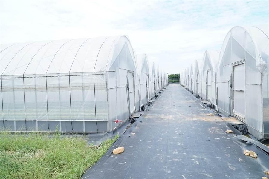 新竹縣政府推動有機安全農業、有機營養午餐等,協助農民爭取農糧署的溫室、溫網設備補助,期望能號召青年返鄉。(莊旻靜攝)