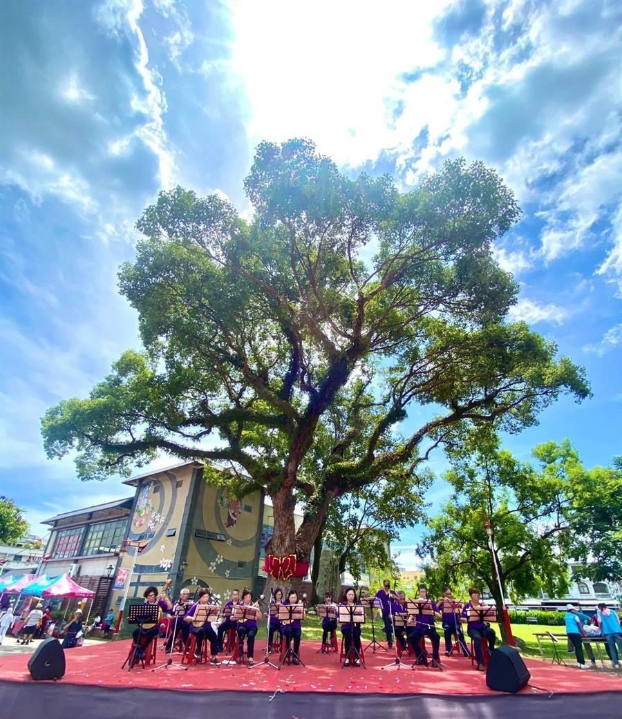 吉安鄉好客藝術村這棵老樟樹,推估樹齡達200。(吉安鄉公所提供/王志偉花蓮傳真)