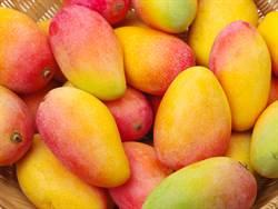 台灣芒果哪個品種最美味?網激推隱藏版:吃到掉淚
