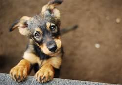 愛犬撞到頭慘變歪脖子 獸醫檢查後笑了