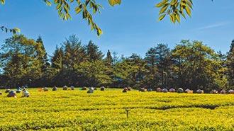 茶界LV 福壽長春茶開放預購