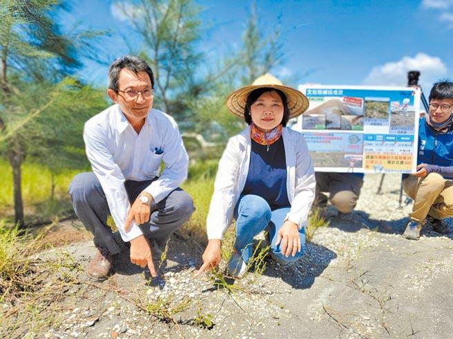 雲林縣長張麗善(右),希望中央持續支持縣環保局載運文蛤殼在濁水溪河床定沙。(周麗蘭攝)