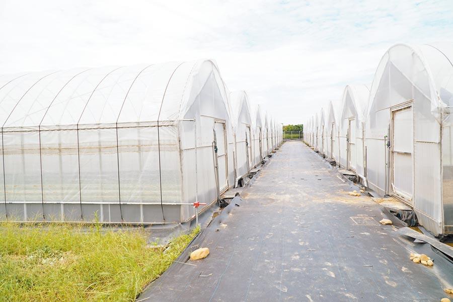 新竹縣政府協助農民爭取農糧署的溫室、溫網設備補助,期望能號召青年返鄉。(莊旻靜攝)